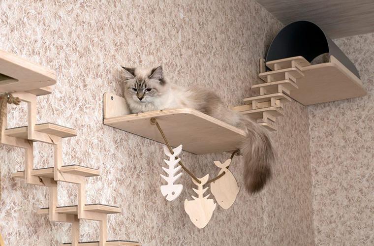игровой сайт кошек